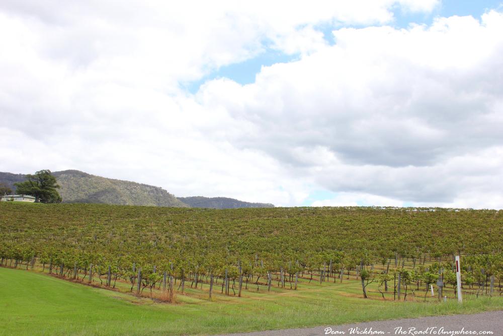 Vineyard in the Hunter Valley, Australia