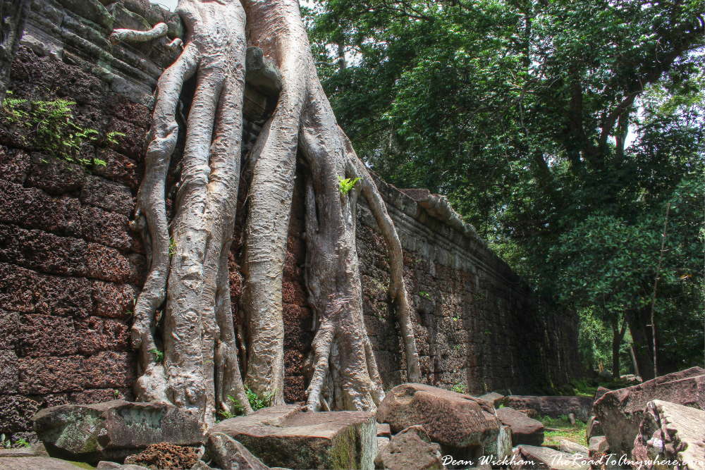 Giant tree roots covering a wall at Preah Khan in Angkor, Cambodia