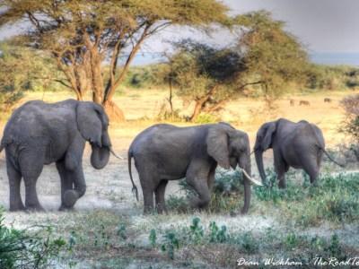 Elephants in Lake Manyara National Park, Tanzania
