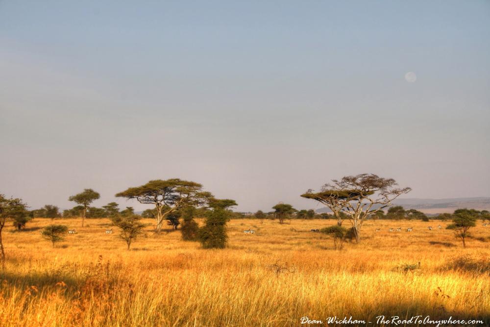 Morning view of the Serengeti Plain in Tanzania
