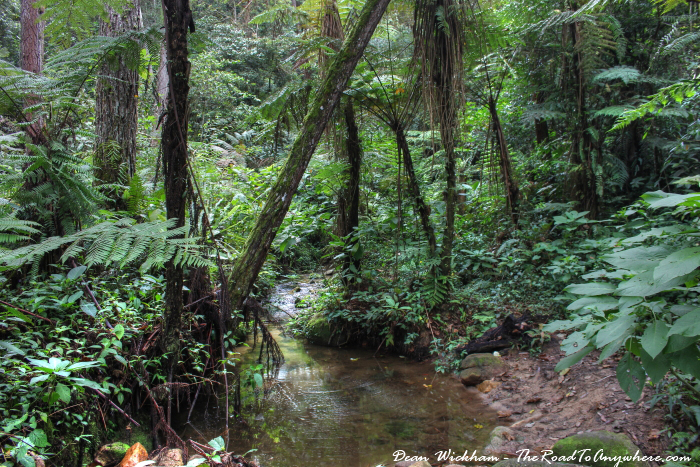 Small stream in the forest in the Cameron Highlands, Malaysia