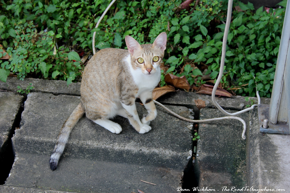 Cat on the street in Chiang Mai, Thailand