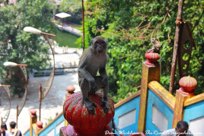 A monkey at Batu Caves in Kuala Lumpur, Malaysia