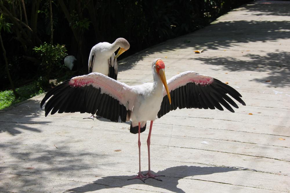KL Bird Park Kuala Lumpur