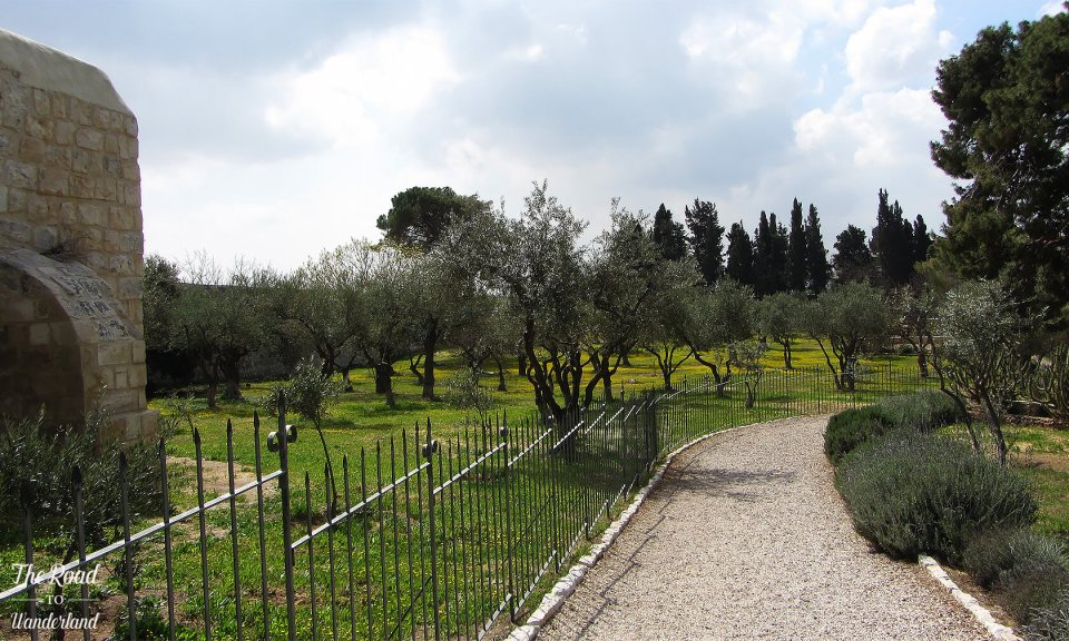 Path leading through olive groves in the church grounds