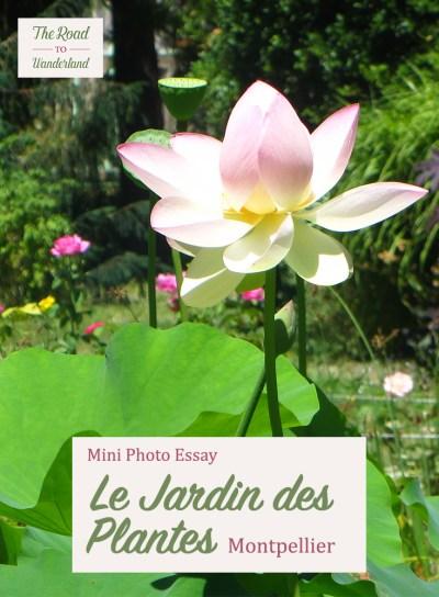 Le Jardin des Plantes Montpellier Pinterest Image