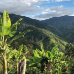 peru el oso microlot coffee plantation