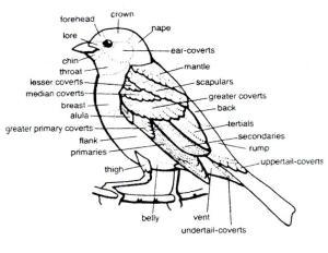 bird diagram  The Rock Pile Garden Center