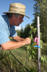 Kyle Morensten, McBride, McBride Winery, BC Ice Wine