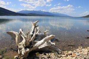 Kinbasket driftwood water lake