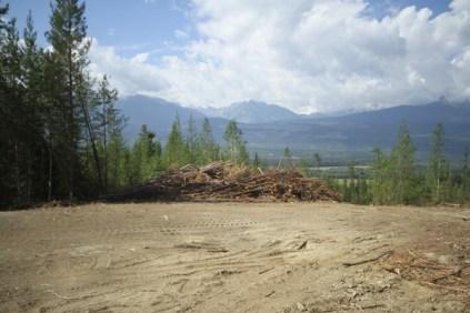 Mt Terry Fox Trail Logging (10)