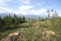 Mt Terry Fox Trail Logging stumps (8)