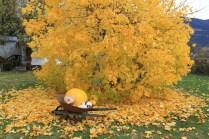 Fall harvest osadchuk pumpkin mushroom valemount (3)