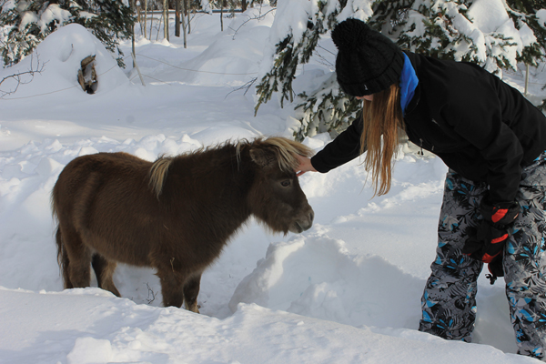 Injured pony runs for first time in 10 years