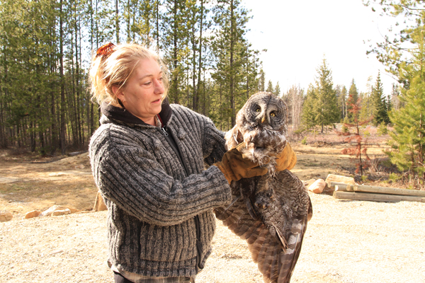 Denise and the injured Great Grey Owl she rescued on her property.