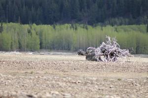 debris kinbasket dead wood (4)