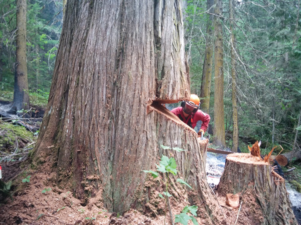 David Carson Falling Danger Treeaa