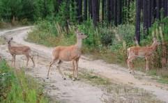 WildlifeandScenery_BethRussel_Firstff