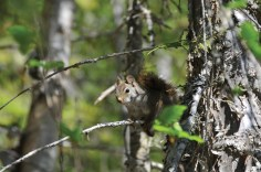 WildlifeandScenery_PaulJohnson_Secondjj