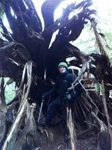 Ross Ballard, ready for an ice climb, stands in the root structure of a fallen ancient cedar.