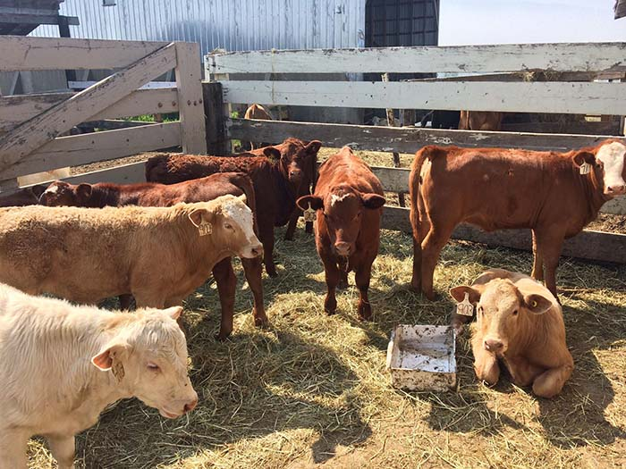 Dunster veterinarian unsettled at dead cattle