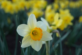 Weekly Photo Challenge: Spring!