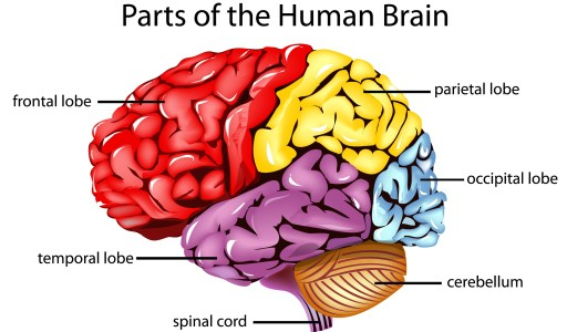 Daily Prompt: Brain Power
