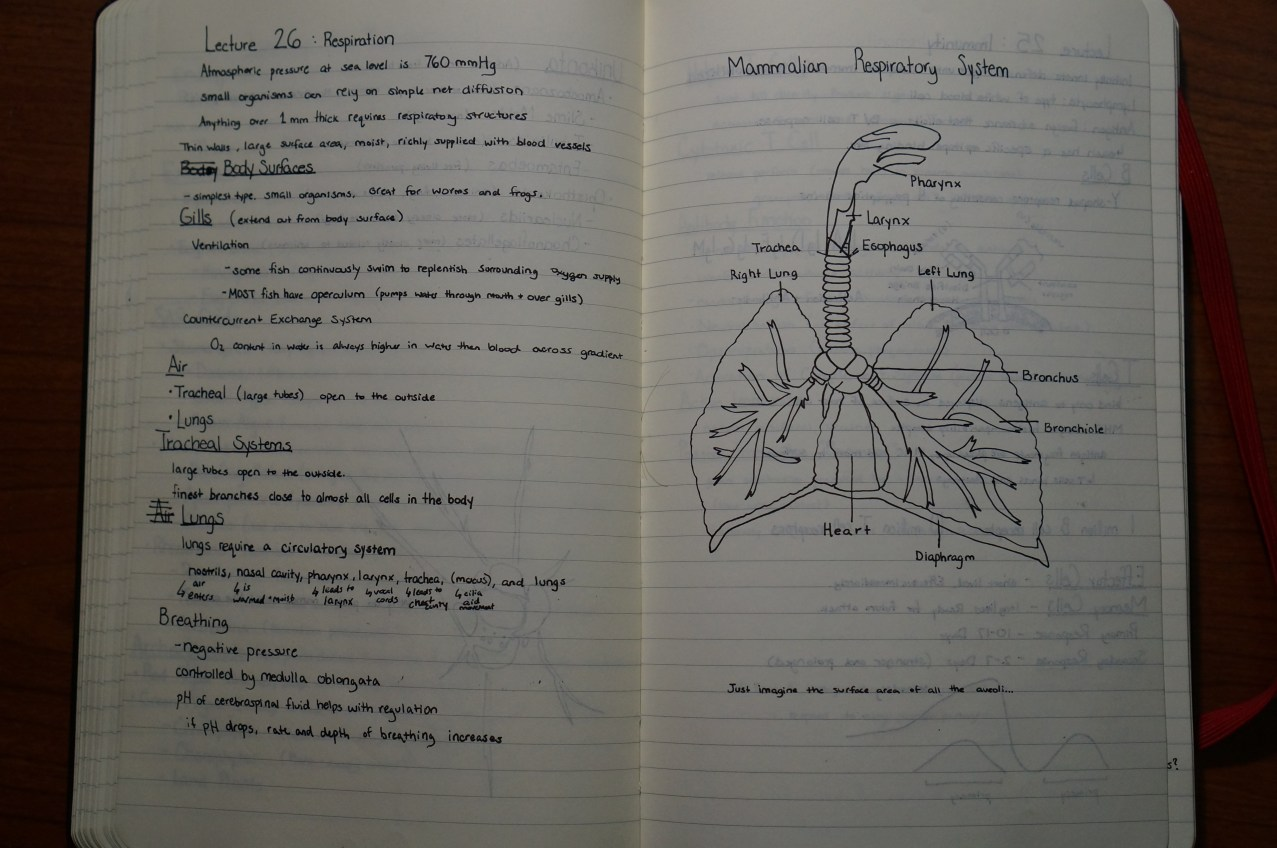 Notes on Respiration