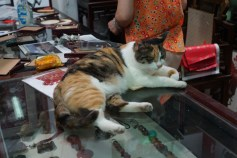 Cat on Store Counter