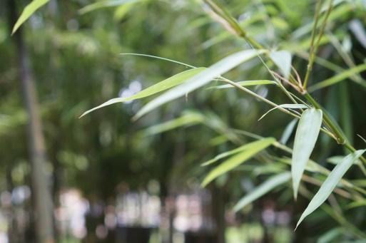 The Famous Lingering Garden of Suzhou, China