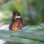 Saint Martin's Butterfly Garden Is the Most Peaceful Place on Earth