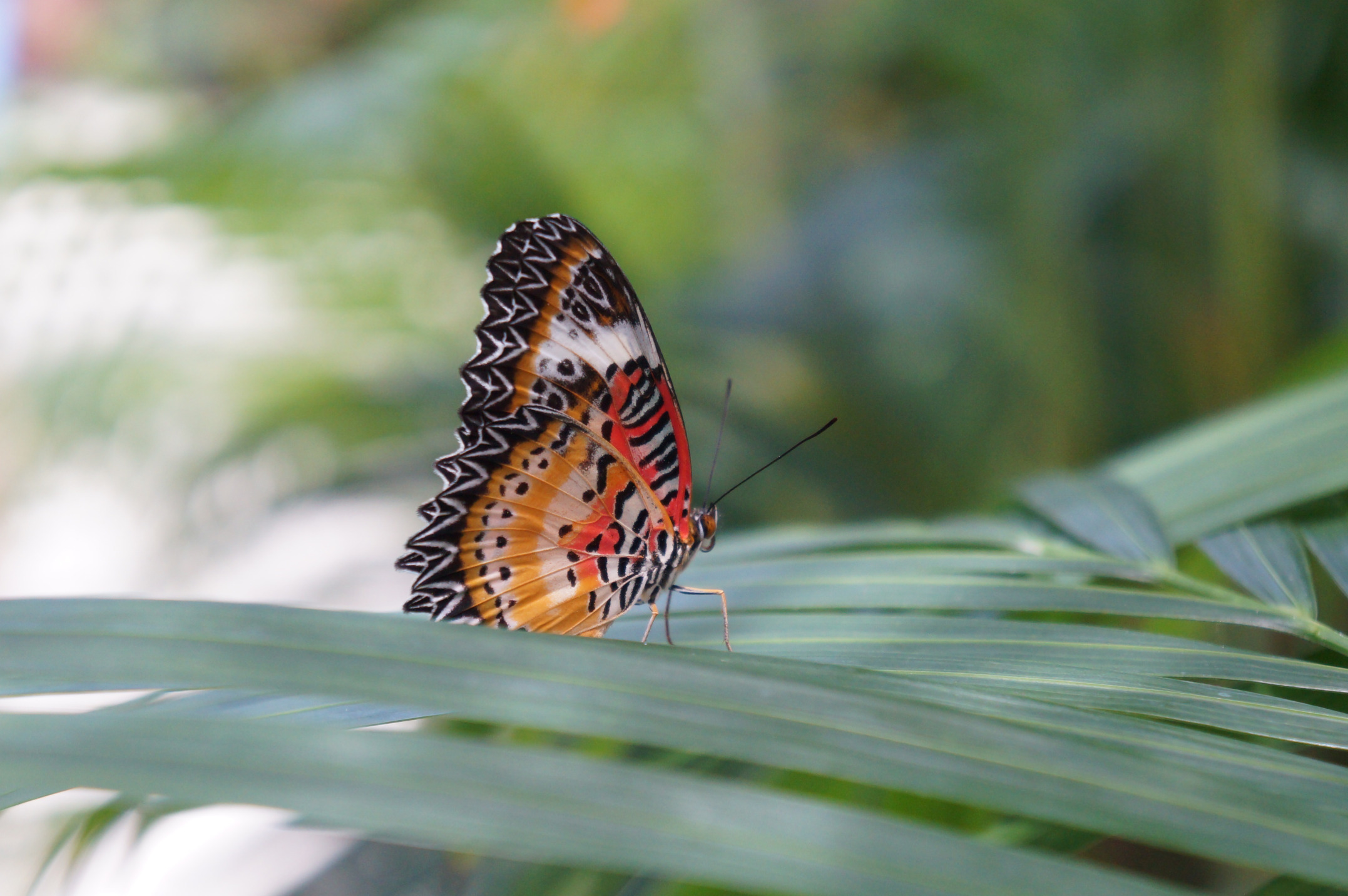 Saint Martin's Butterfly Garden Is the Most Peaceful Place