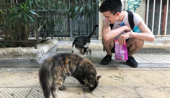 Little Whiskas to Feed the Cats of (C)Athens