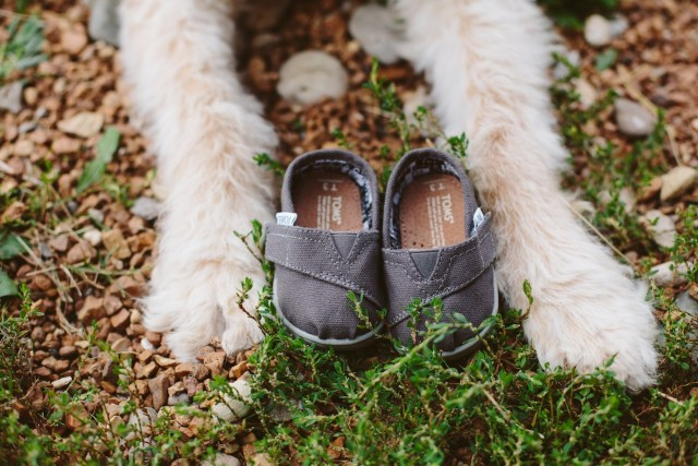 Unique Baby Announcement Photo with goldendoodle dog and toms shoes