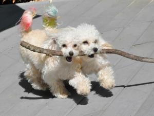 Like A Dog