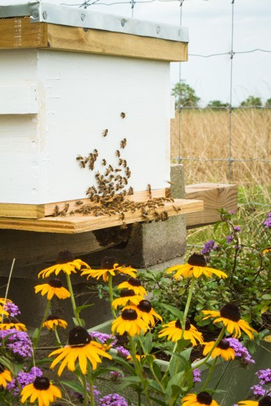 Bees On Bee Hive With Flowers