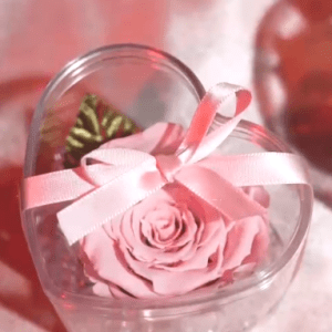 pink rose in heart