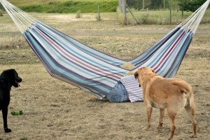 russ breaks hammock dogs laughing edited