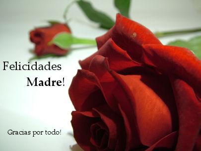 rosas feliz dia madre