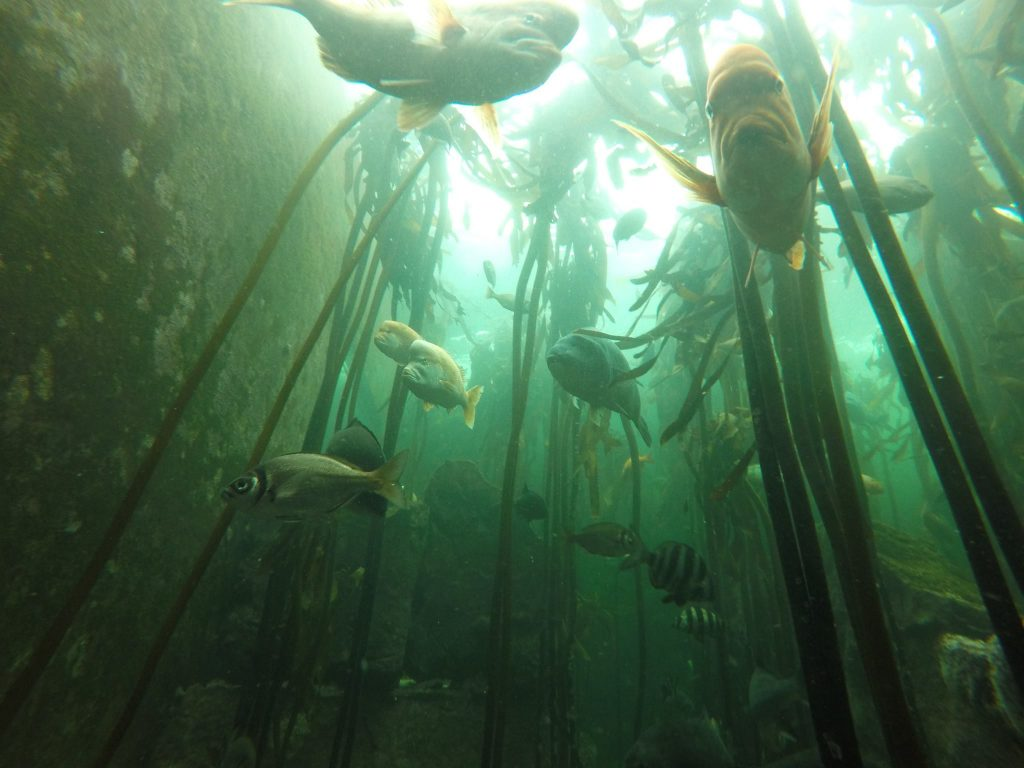 Inside the Two oceans aquarium Kelp Forest Exhibit