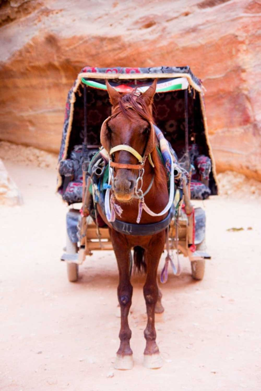 Tips for exploring Petra: A working horse and his carriage. An option to get you to places in Petra in shorter time.