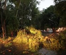 मेरठ : तेज आंधी और बारिश से टूटे तार, गिरे पेड़, घंटों बिजली आपूर्ति ठप