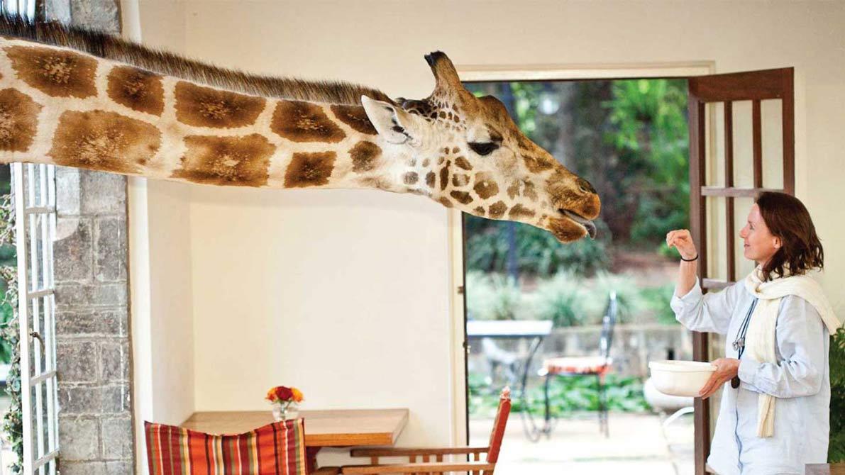 نتيجة بحث الصور عن Giraffe Manor.
