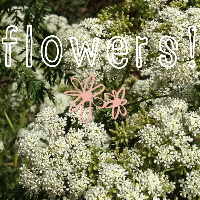 Flowers, edited via the A Beautiful Mess App for iPhone