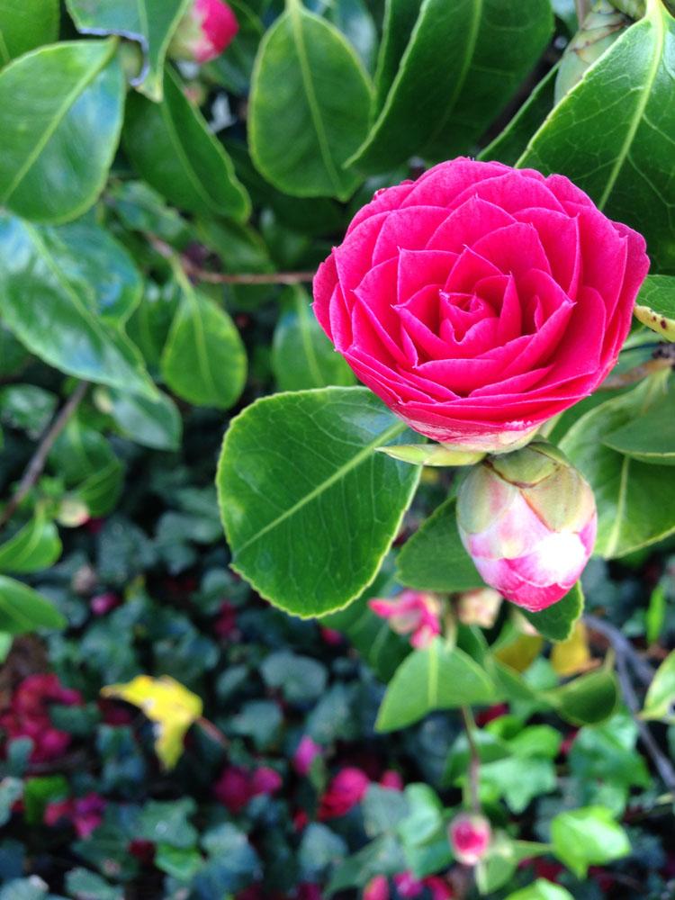 Flower at Presidio