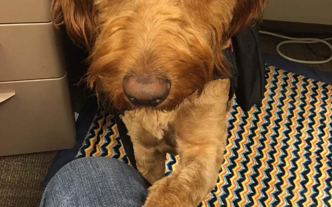 Savvy Pets, 10/4/19:  Gotta love NOODLE!
