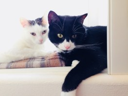 Guest Blog: Life with Cody, the Tuxedo Cat with Type 1 Diabetes