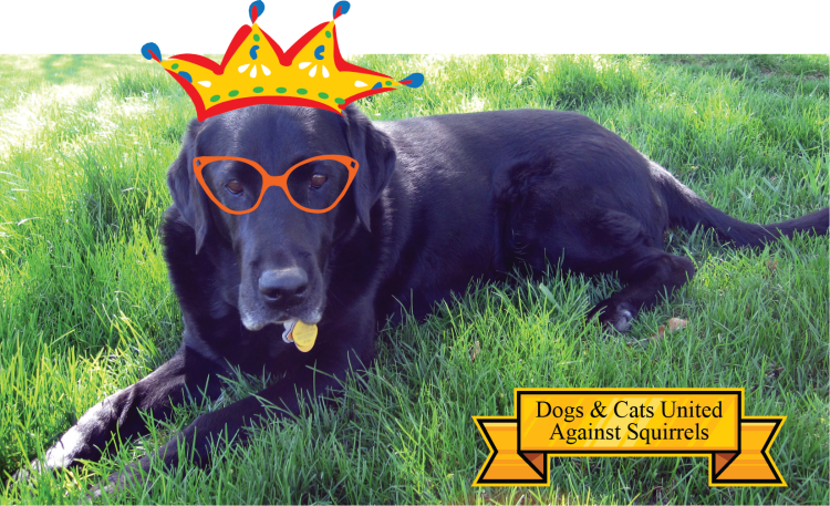 Savvy Pets:  Remembering Abby the Black Lab