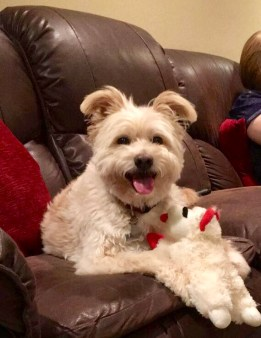 Savvy Pets, 11/15/19: Hello Scout! And why you should look