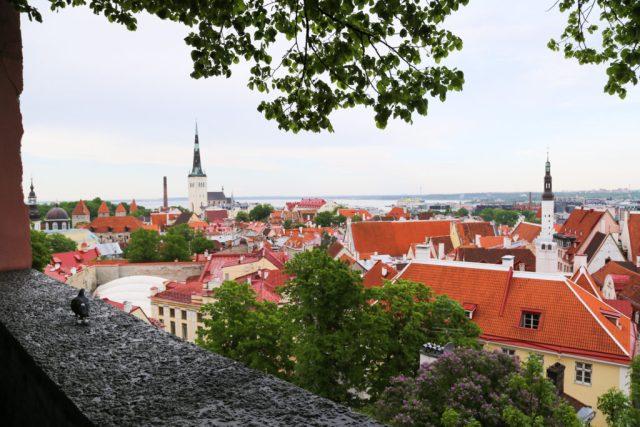 fairytale city of Tallinn